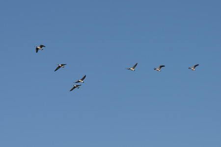 Low angle view of birds flying in the sky, Kenora, Lake of The Woods, Ontario, Canada Imagens