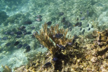 utopia: Underwater view of fishes on reef, Utopia Village, Utila, Bay Islands, Honduras