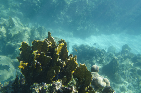 utopia: Underwater view of coral wall, Utopia Village, Utila, Bay Islands, Honduras
