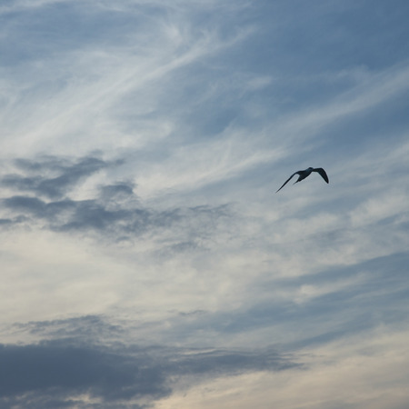 photography themes: Low angle view of a bird flying in the sky, Utila Island, Bay Islands, Honduras
