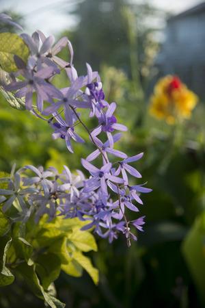 花、ケイマン ケイ ウティラ島、湾の島々、ホンジュラスのクローズ アップ 写真素材
