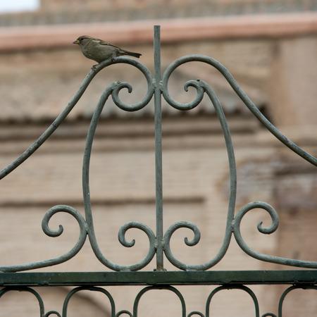 puertas de hierro: Pájaro que se encarama en la rejilla del metal de la puerta, Marrakech, Marruecos Foto de archivo