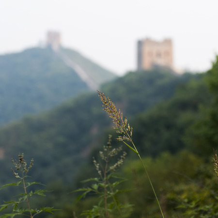 simatai: Plant with Jinshanling to Simatai section of Great Wall Of China