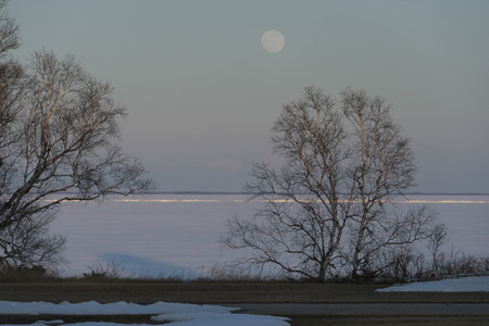 Trees at the frozen lakeside, Riverton, Hecla Grindstone Provincial Park, Manitoba, Canada photo