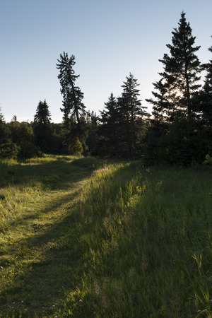 Trees in a forest, Wasagaming, Riding Mountain National Park, Manitoba, Canada