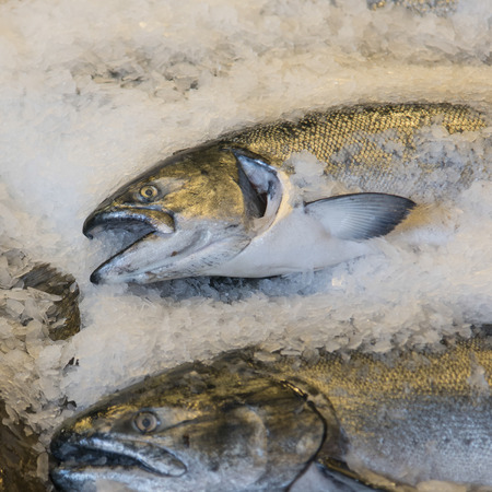 food state: Fish on ice for sale at Pike Place Market, Seattle, Washington State, USA