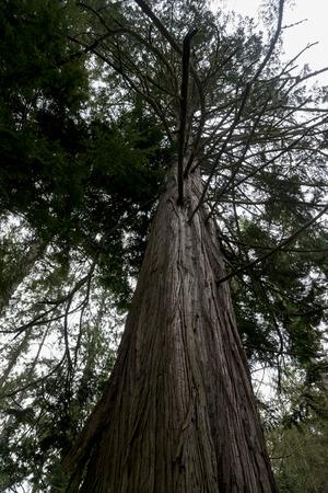 Low angle view of a tree, Deception Pass State Park, Washington State, USA photo