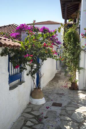 planters: Flower Planters and Houses along alley in Thessalia Sterea Ellada, Skopelos, Greece