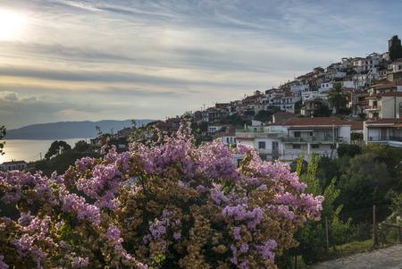 Blossoms with buildings in town, Glossa, Thessalia Sterea Ellada, Skopelos, Greece
