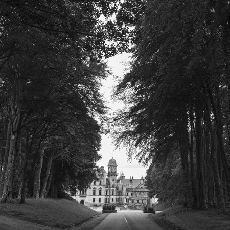 scottish culture: Trees along road leading toward the Dunrobin Castle, Golspie, Sutherland, Scottish Highlands, Scotland