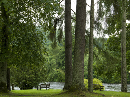 tay: View of trees and bench by River Tay, Dunkeld Cathedral, Dunkeld, Perth and Kinross, Scotland