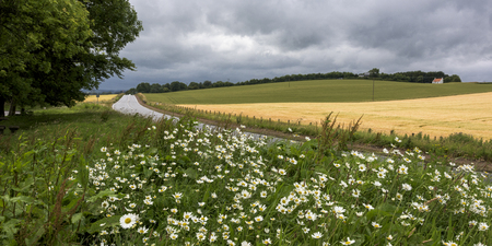 Wildflowers in bloom by country road on agricultural landscape, Auchtermuchty, Fife, Scotland