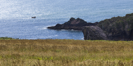 physical geography: View of grass growing at coast, Scotland