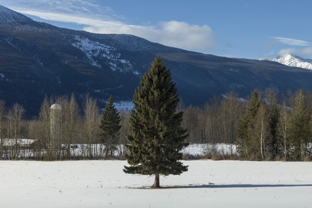 Trees in snow covered field, Highway 16, Yellowhead Highway, British Columbia, Canada