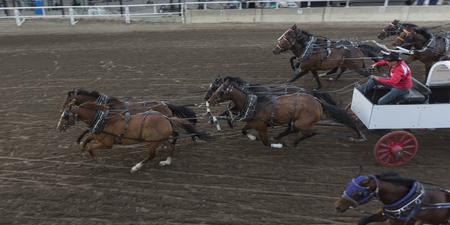 calgary stampede: Chuckwagon racing at the annual Calgary Stampede, Calgary, Alberta, Canada