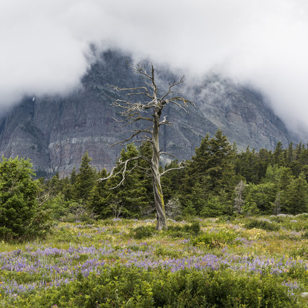 Trees and flowers on landscape with mountain in the background, Many Glacier, Glacier National Park, Glacier County, Montana, USA