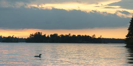 Common Loon (Gavia immer) zwemmen in het meer bij zonsopgang, Lake of The Woods, Ontario, Canada