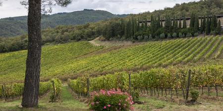 Scenic view of vineyards, Radda in Chianti, Tuscany, Italy Stock Photo