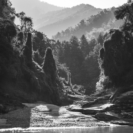 Trees in forest at riverside, River Mekong, Sainyabuli Province, Laos