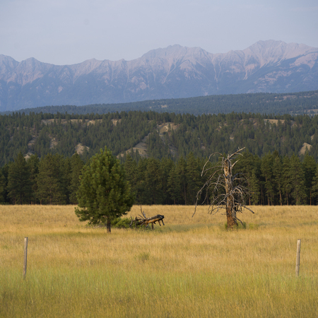 Trees in field with mountain range in the background, Fairmont Hot Springs, British Columbia, Canada Stock Photo