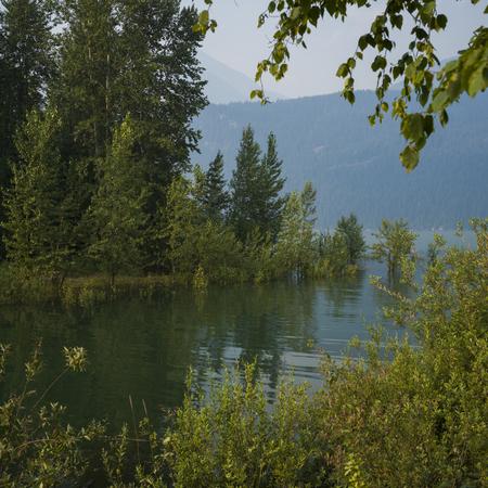 Stream flowing through forest, British Columbia, Canada