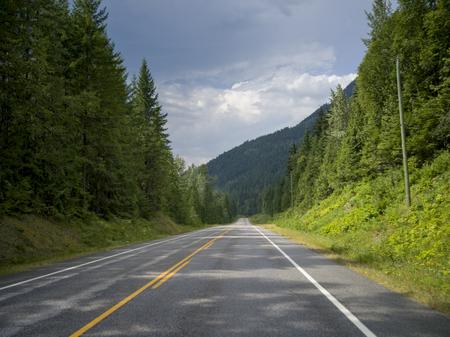 Trees along road, British Columbia, Canada