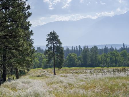 Crop in field, British Columbia, Canada