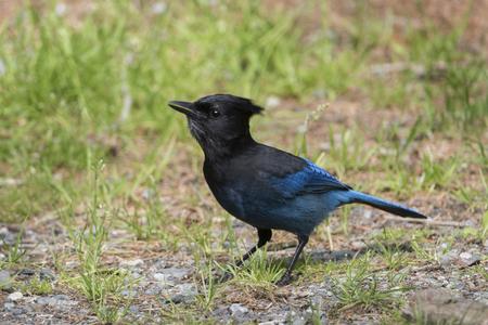 Close-up of a bird, Vancouver Island, British Columbia, Canada