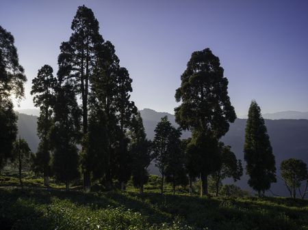 Scenic view of Tukdah Tea Garden, Darjeeling, West Bengal, India Stock Photo - 112154820
