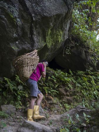 Man carrying firewood, Bhalu Khop Village, West Sikkim, Sikkim