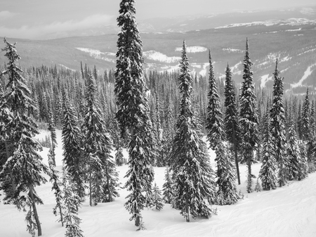 Snow covered trees, Sun Peaks Resort, Sun Peaks, British Columbia, Canada