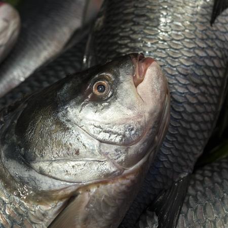 Close-up of fish at Naskar Fish Stall, Maniktala, Kolkata, West Bengal, India Stock Photo