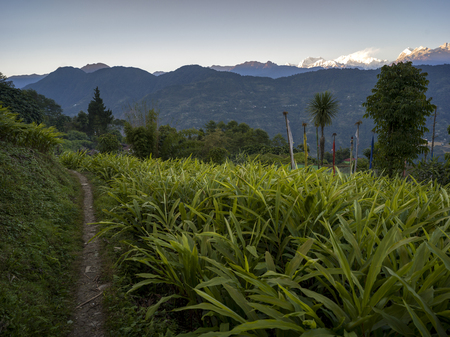 Field with Singalila Range, Great Himalaya Range, Sikkim, India