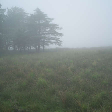 Ireland - countryside