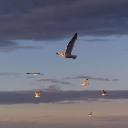 Lake Scenes - birds at sunset Stock Photo - 179476