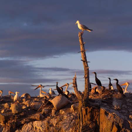 Lake Scenes - birds at sunset Stock Photo - 179487