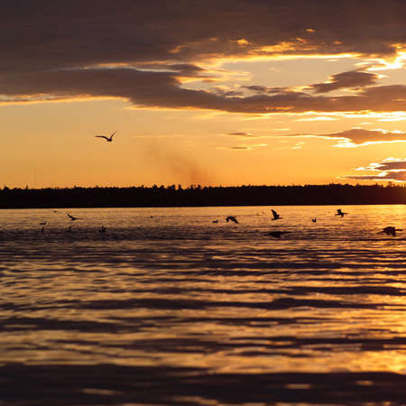 Lake Scenes - birds at sunset Stock Photo - 179495