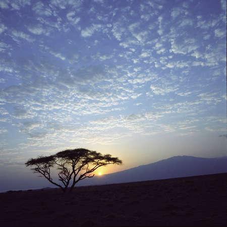 acacia tree: Acacia tree at Lake Natron Stock Photo