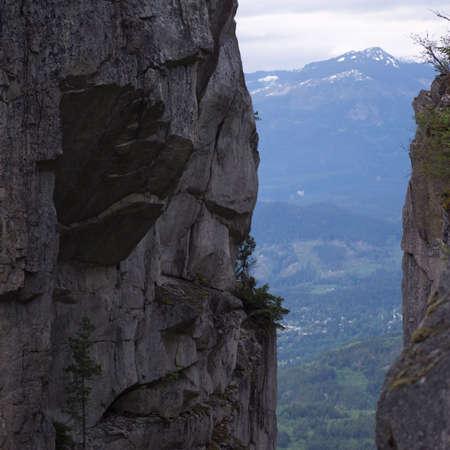 treed: Squamish - Vancouver, British Columbia