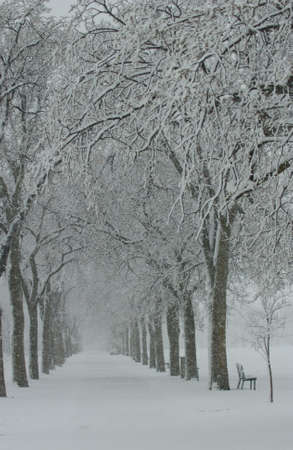 Winter Scenes - Canada photo