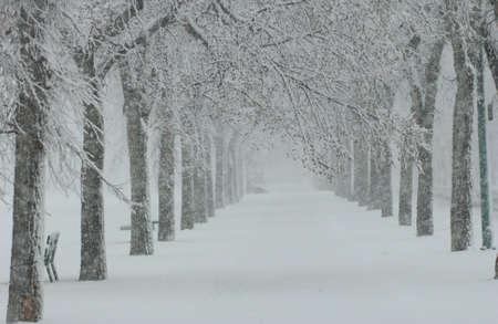 Winter Scenes - Canada photo