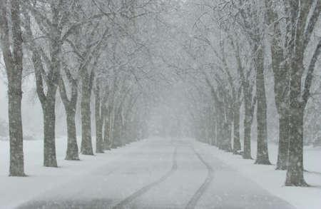 and winter: Winter Scenes - Canada