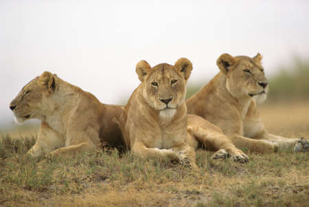 Tanzania, Africa - Serengeti, Ngorongoro Crater Stock Photo - 180283