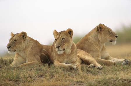 Tanzania, Africa - Serengeti, Ngorongoro Crater photo