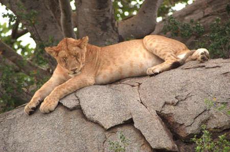 africat: Tanzania, Africa - Serengeti, Ngorongoro Crater Stock Photo