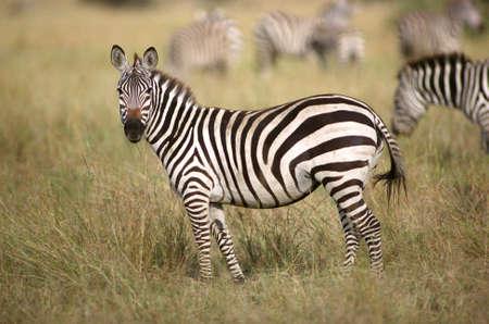 Tanzania, Africa - Serengeti, Ngorongoro Crater Stock Photo - 180294