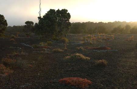 desolation: Volcano National Park - Big Island of Hawaii - Desolation Trail