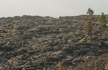 hardened: Volcano National Park - Big Island of Hawaii - hardened lava Stock Photo