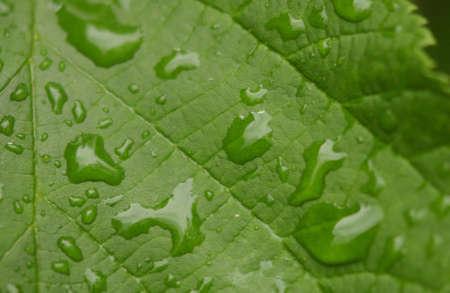 nature - leaves photo