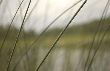 lilypads at lake Stock Photo